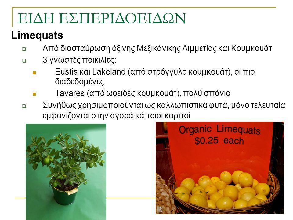 Limequats  Από διασταύρωση όξινης Μεξικάνικης Λιμμετίας και Κουμκουάτ  3 γνωστές ποικιλίες: Eustis και Lakeland (από στρόγγυλο κουμκουάτ), οι πιο δι