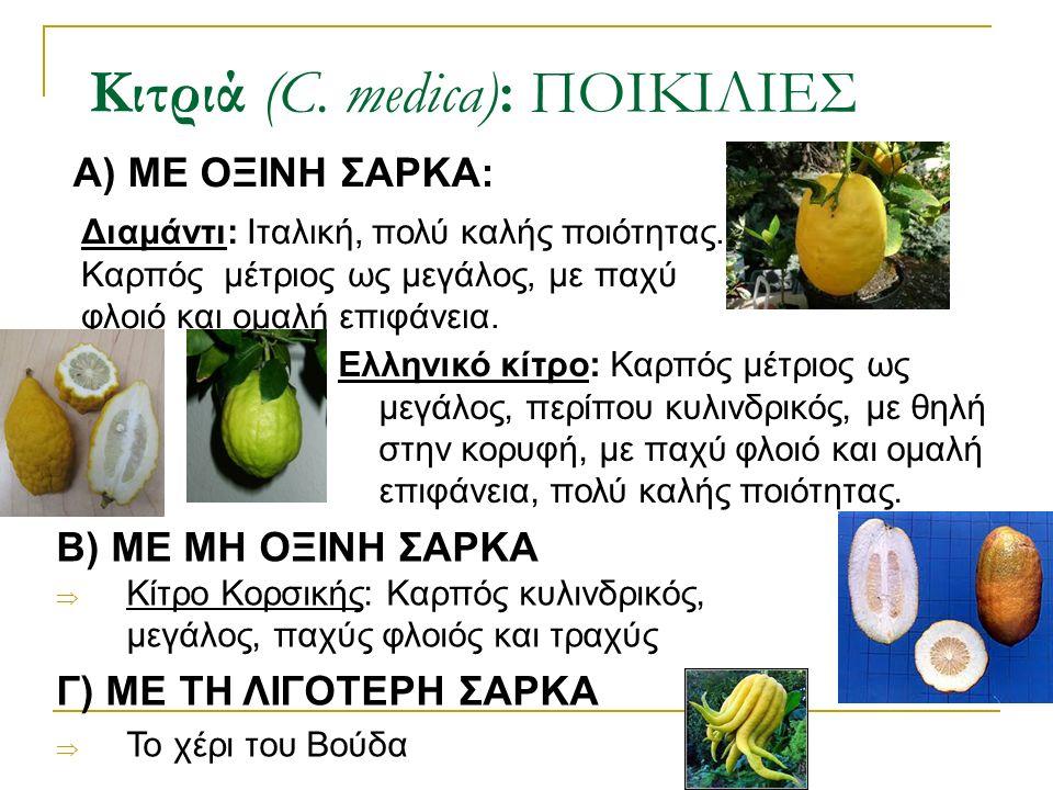 Α) ΜΕ ΟΞΙΝΗ ΣΑΡΚΑ: Κιτριά (C. medica): ΠΟΙΚΙΛΙΕΣ Ελληνικό κίτρο: Καρπός μέτριος ως μεγάλος, περίπου κυλινδρικός, με θηλή στην κορυφή, με παχύ φλοιό κα