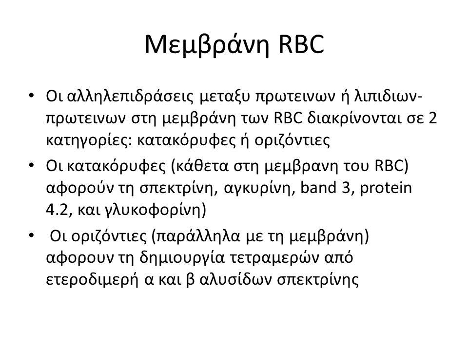 Μεμβράνη RBC Οι αλληλεπιδράσεις μεταξυ πρωτεινων ή λιπιδιων- πρωτεινων στη μεμβράνη των RBC διακρίνονται σε 2 κατηγορίες: κατακόρυφες ή οριζόντιες Οι
