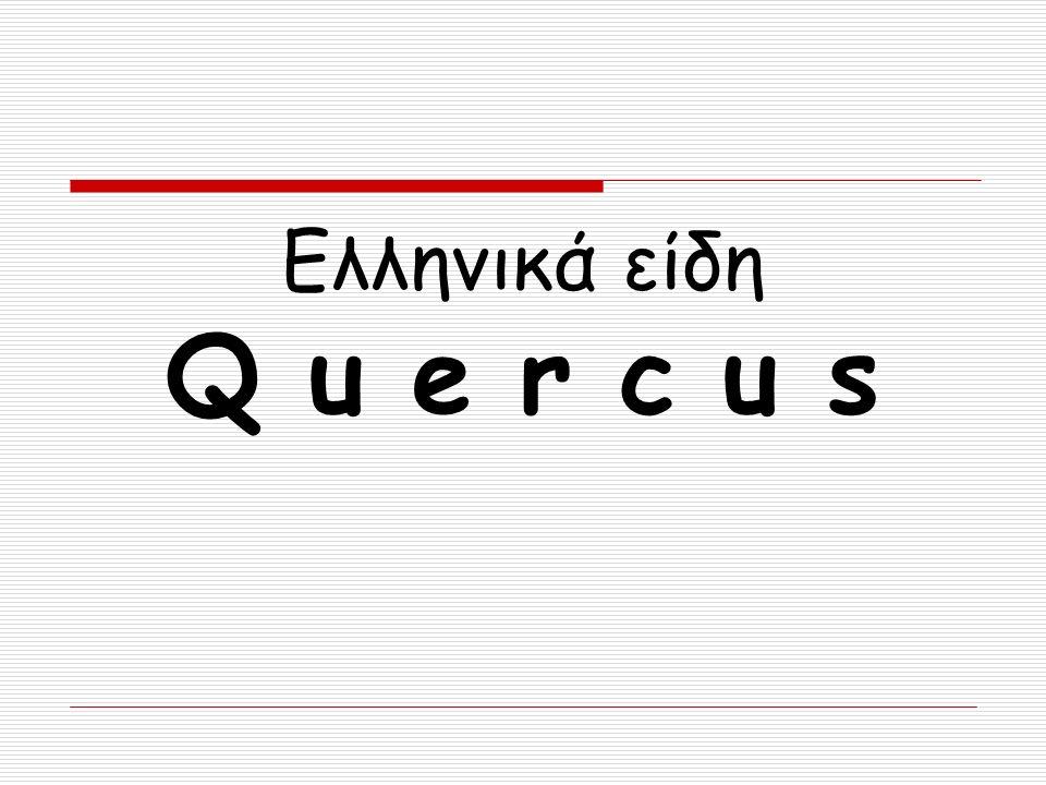 Ελληνικά είδη Q u e r c u s