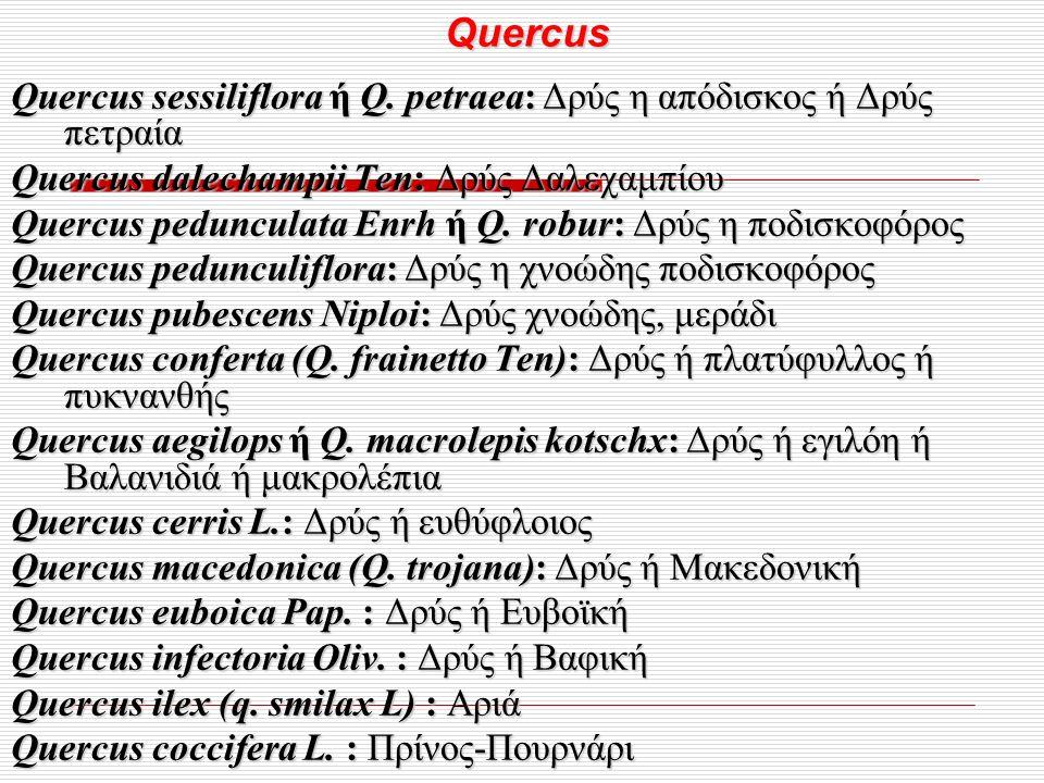 Quercus Quercus Quercus sessiliflora ή Q.
