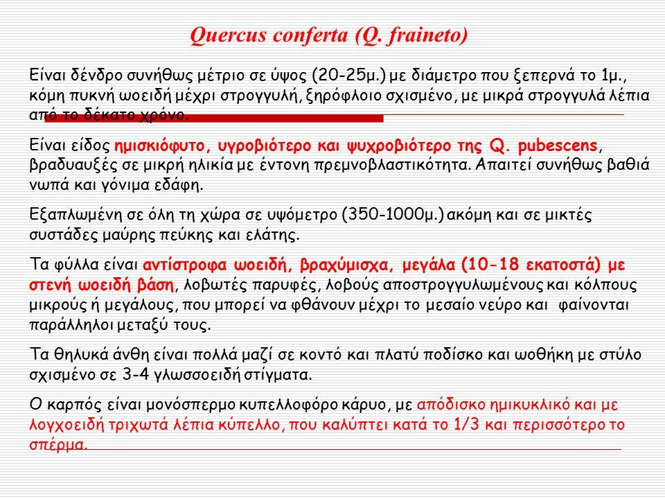 Quercus conferta (Q.