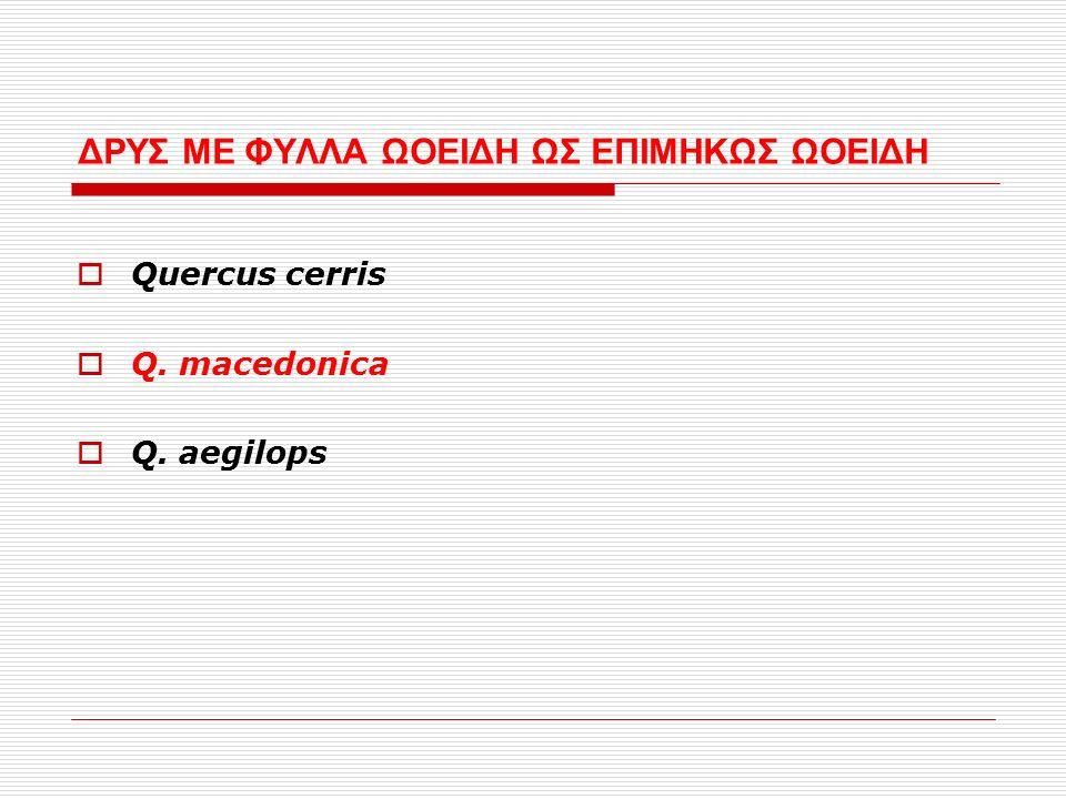 ΔΡΥΣ ΜΕ ΦΥΛΛΑ ΩΟΕΙΔΗ ΩΣ ΕΠΙΜΗΚΩΣ ΩΟΕΙΔΗ  Quercus cerris  Q. macedonica  Q. aegilops