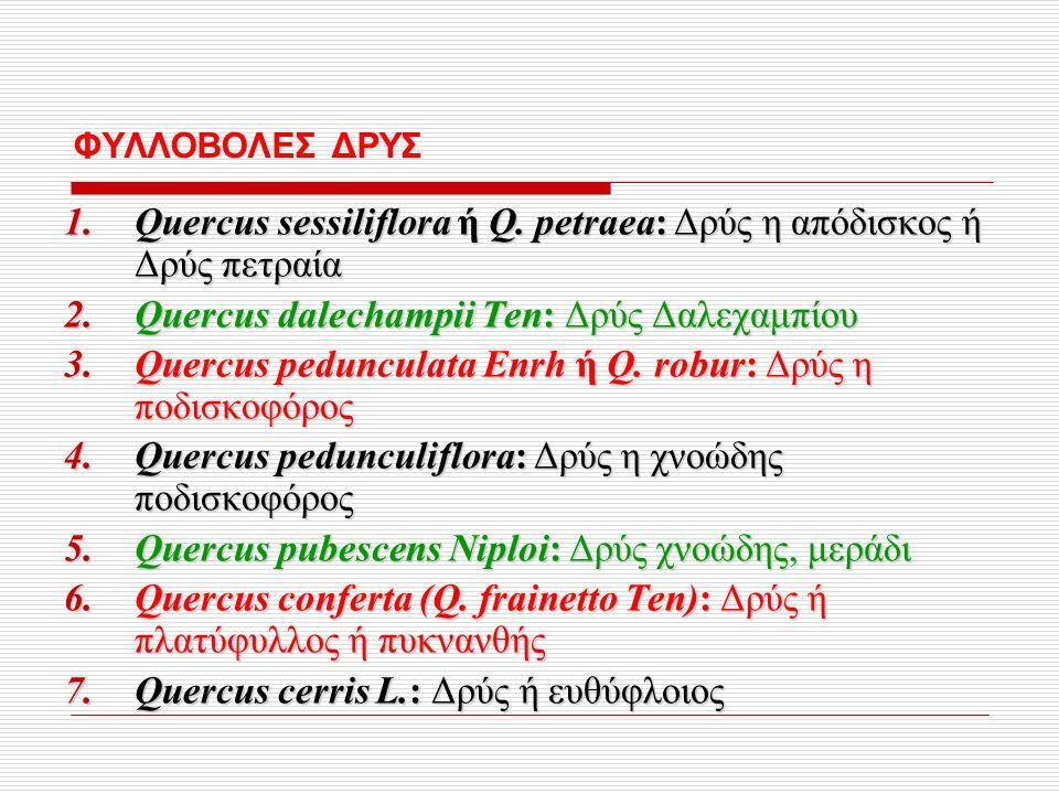 ΦΥΛΛΟΒΟΛΕΣ ΔΡΥΣ 1.Quercus sessiliflora ή Q.