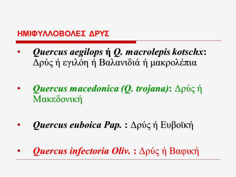 ΗΜΙΦΥΛΛΟΒΟΛΕΣ ΔΡΥΣ Quercus aegilops ή Q.