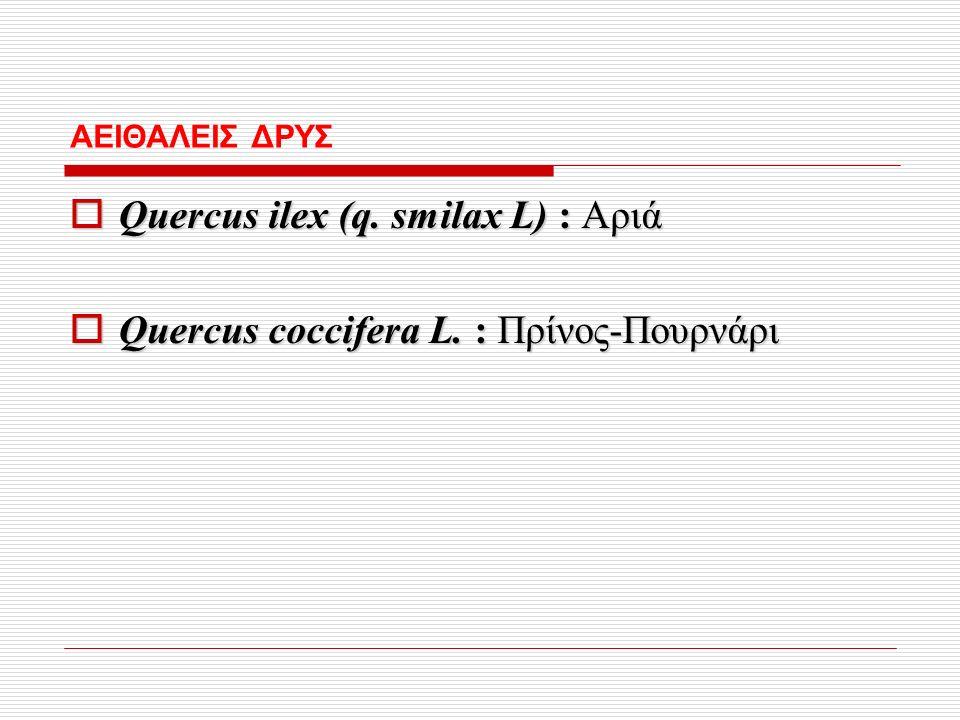 ΑΕΙΘΑΛΕΙΣ ΔΡΥΣ  Quercus ilex (q. smilax L) : Αριά  Quercus coccifera L. : Πρίνος-Πουρνάρι