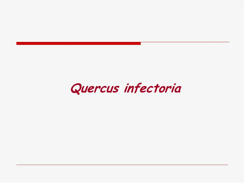 Quercus infectoria