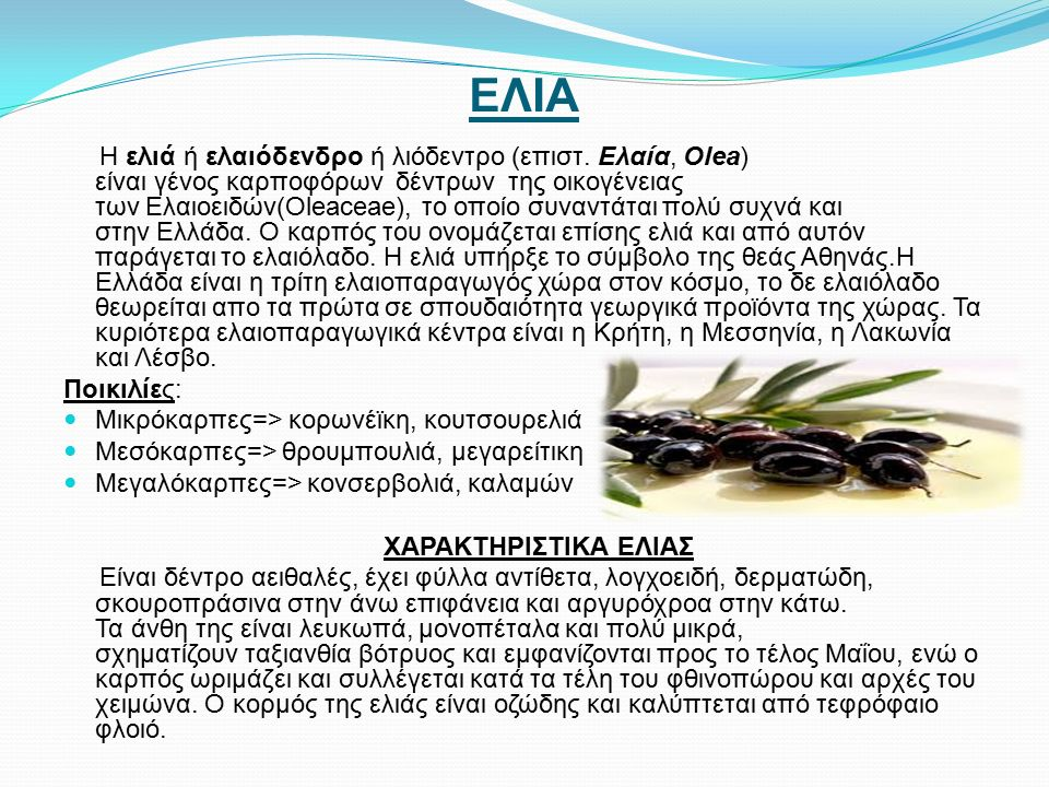 ΕΛΙΑ Η ελιά ή ελαιόδενδρο ή λιόδεντρο (επιστ.