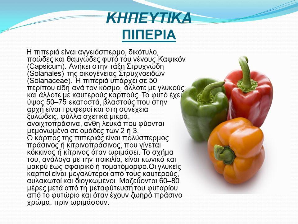 ΚΗΠΕΥΤΙΚΑ ΠΙΠΕΡΙΑ Η πιπεριά είναι αγγειόσπερμο, δικότυλο, ποώδες και θαμνώδες φυτό του γένους Καψικόν (Capsicum).