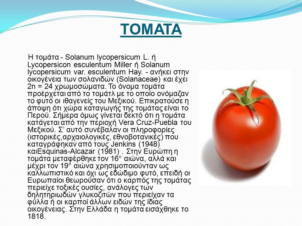 ΤΟΜΑΤΑ Η τομάτα - Solanum lycopersicum L.