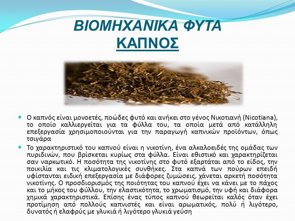 ΒΙΟΜΗΧΑΝΙΚΑ ΦΥΤΑ ΚΑΠΝΟΣ Ο καπνός είναι μονοετές, ποώδες φυτό και ανήκει στο γένος Νικοτιανή (Nicotiana), το οποίο καλλιεργείται για τα φύλλα του, τα οποία μετά από κατάλληλη επεξεργασία χρησιμοποιούνται για την παραγωγή καπνικών προϊόντων, όπως τσιγάρα Το χαρακτηριστικό του καπνού είναι η νικοτίνη, ένα αλκαλοειδές της ομάδας των πυριδινών, που βρίσκεται κυρίως στα φύλλα.