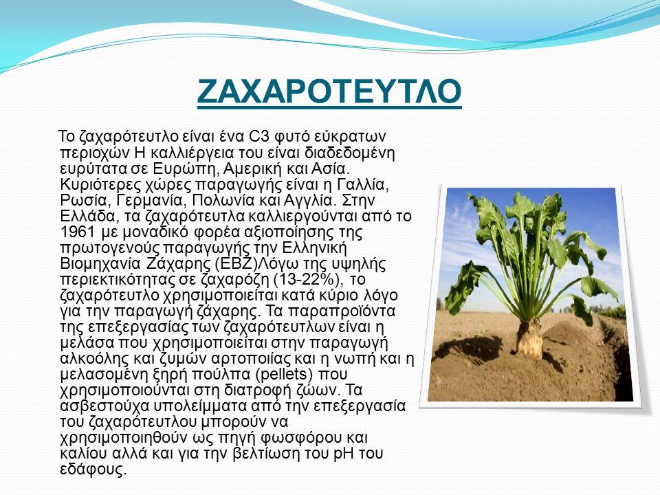 ΖΑΧΑΡΟΤΕΥΤΛΟ Το ζαχαρότευτλο είναι ένα C3 φυτό εύκρατων περιοχών Η καλλιέργεια του είναι διαδεδομένη ευρύτατα σε Ευρώπη, Αμερική και Ασία.