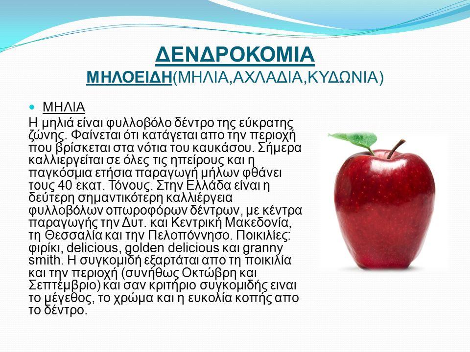 ΔΕΝΔΡΟΚΟΜΙΑ ΜΗΛΟΕΙΔΗ(ΜΗΛΙΑ,ΑΧΛΑΔΙΑ,ΚΥΔΩΝΙΑ) ΜΗΛΙΑ Η μηλιά είναι φυλλοβόλο δέντρο της εύκρατης ζώνης.