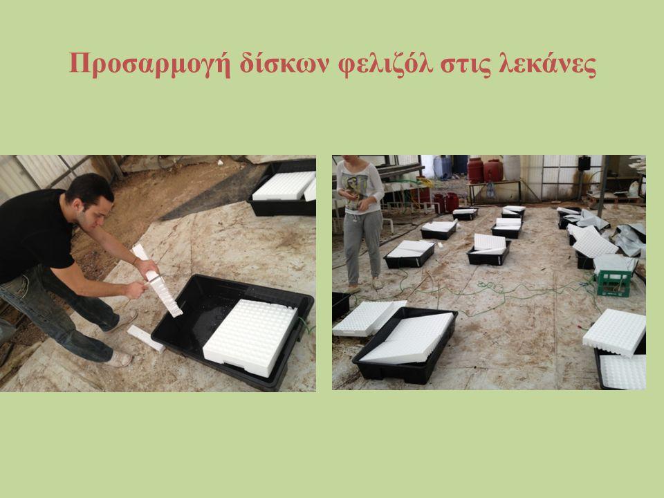 Προσαρμογή δίσκων φελιζόλ στις λεκάνες