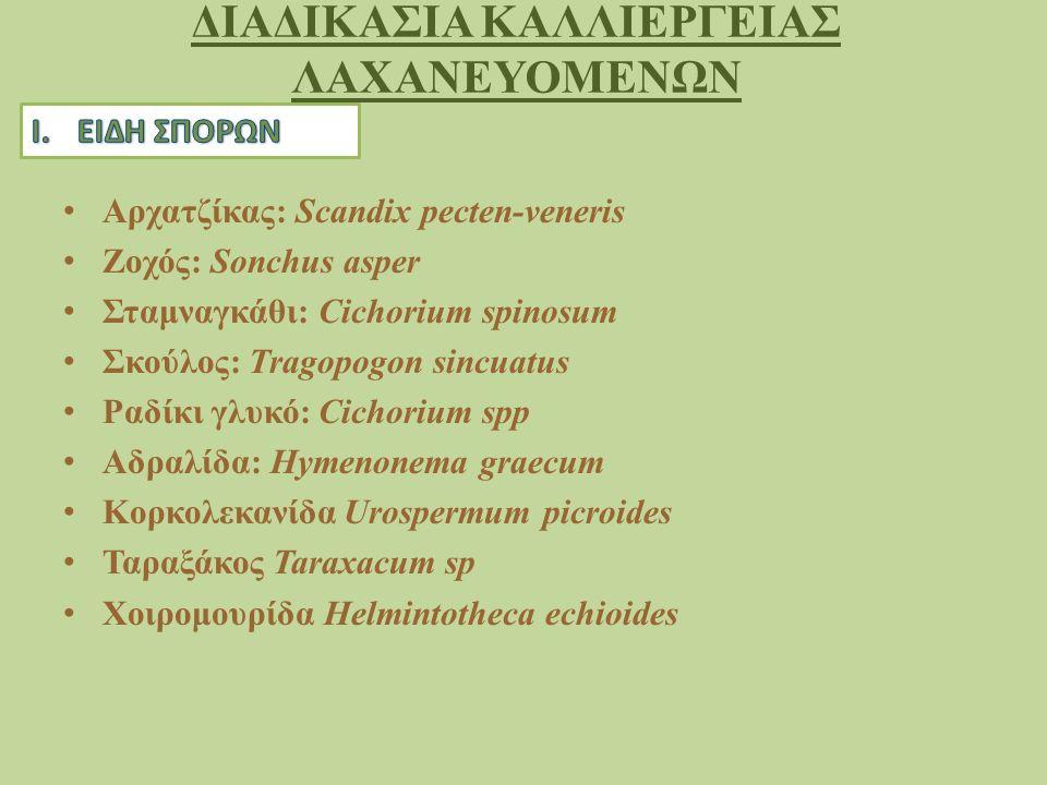 ΔΙΑΔΙΚΑΣΙΑ ΚΑΛΛΙΕΡΓΕΙΑΣ ΛΑΧΑΝΕΥΟΜΕΝΩΝ Αρχατζίκας: Scandix pecten-veneris Ζοχός: Sonchus asper Σταμναγκάθι: Cichorium spinosum Σκούλος: Tragopogon sincuatus Ραδίκι γλυκό: Cichorium spp Αδραλίδα: Hymenonema graecum Κορκολεκανίδα Urospermum picroides Ταραξάκος Taraxacum sp Χοιρομουρίδα Helmintotheca echioides