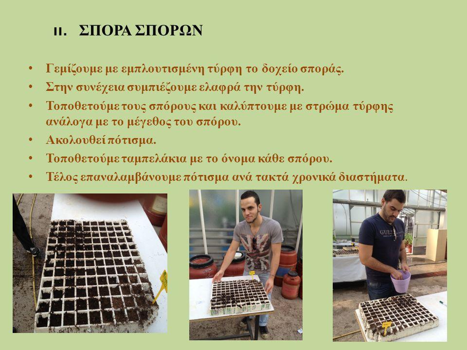 Γεμίζουμε με εμπλουτισμένη τύρφη το δοχείο σποράς. Στην συνέχεια συμπιέζουμε ελαφρά την τύρφη. Τοποθετούμε τους σπόρους και καλύπτουμε με στρώμα τύρφη