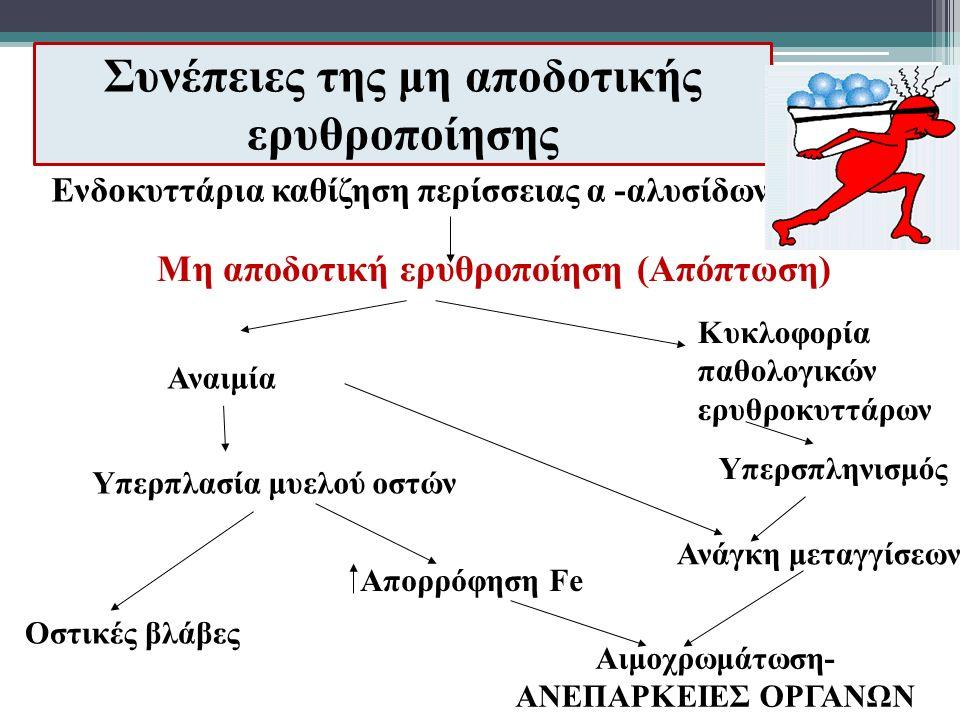 Συνέπειες της μη αποδοτικής ερυθροποίησης Μη αποδοτική ερυθροποίηση (Απόπτωση) Αναιμία Κυκλοφορία παθολογικών ερυθροκυττάρων Υπερπλασία μυελού οστών Οστικές βλάβες Υπερσπληνισμός Απορρόφηση Fe Ανάγκη μεταγγίσεων Αιμοχρωμάτωση- ΑΝΕΠΑΡΚΕΙΕΣ ΟΡΓΑΝΩΝ Ενδοκυττάρια καθίζηση περίσσειας α -αλυσίδων