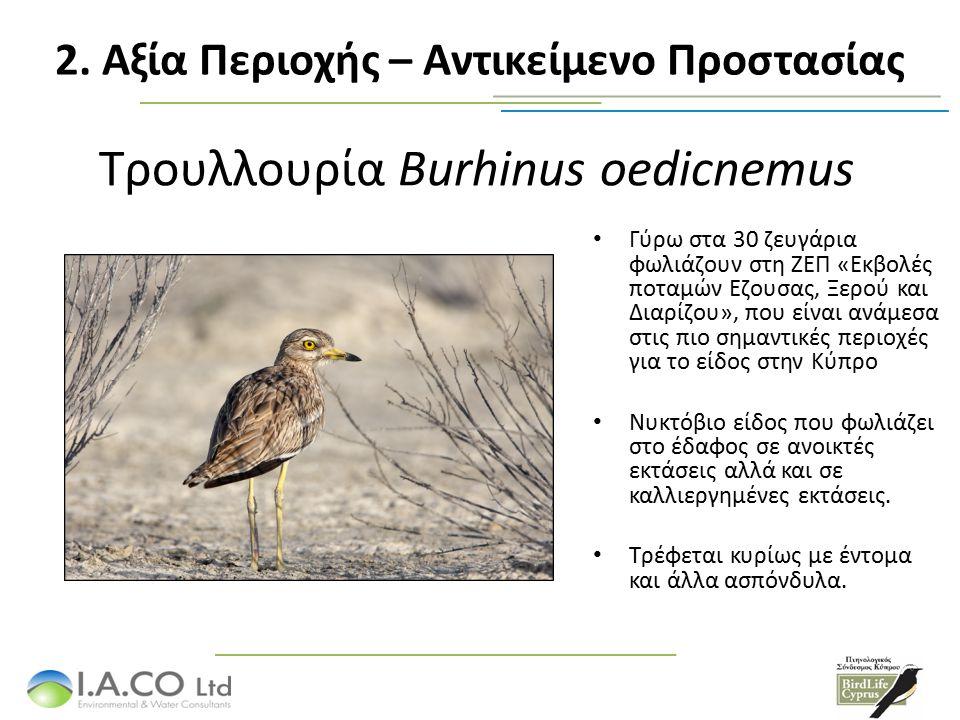 Τρουλλουρία Burhinus oedicnemus Γύρω στα 30 ζευγάρια φωλιάζουν στη ΖΕΠ «Εκβολές ποταμών Εζουσας, Ξερού και Διαρίζου», που είναι ανάμεσα στις πιο σημαντικές περιοχές για το είδος στην Κύπρο Νυκτόβιο είδος που φωλιάζει στο έδαφος σε ανοικτές εκτάσεις αλλά και σε καλλιεργημένες εκτάσεις.