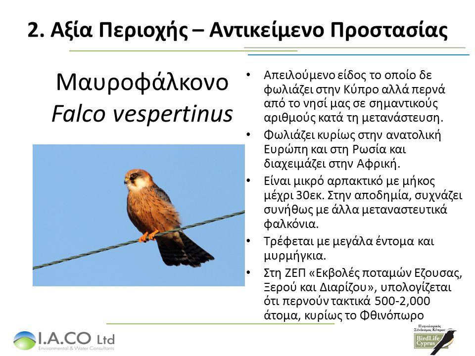 Μαυροφάλκονο Falco vespertinus Απειλούμενο είδος το οποίο δε φωλιάζει στην Κύπρο αλλά περνά από το νησί μας σε σημαντικούς αριθμούς κατά τη μετανάστευ
