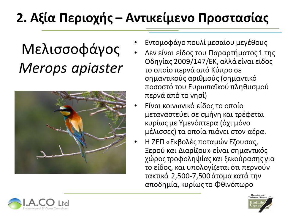 Μελισσοφάγος Merops apiaster Εντομοφάγο πουλί μεσαίου μεγέθους Δεν είναι είδος του Παραρτήματος 1 της Οδηγίας 2009/147/ΕΚ, αλλά είναι είδος το οποίο π