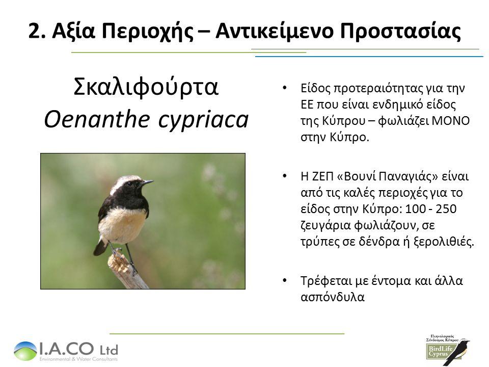 Σκαλιφούρτα Oenanthe cypriaca Είδος προτεραιότητας για την ΕΕ που είναι ενδημικό είδος της Κύπρου – φωλιάζει ΜΟΝΟ στην Κύπρο. Η ΖΕΠ «Βουνί Παναγιάς» ε