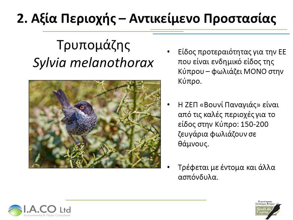 Τρυπομάζης Sylvia melanothorax Είδος προτεραιότητας για την ΕΕ που είναι ενδημικό είδος της Κύπρου – φωλιάζει ΜΟΝΟ στην Κύπρο. Η ΖΕΠ «Βουνί Παναγιάς»