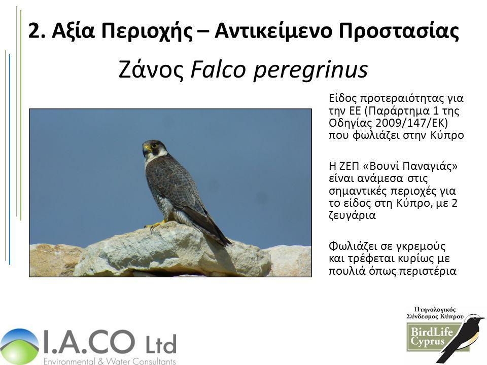 Ζάνος Falco peregrinus Είδος προτεραιότητας για την ΕΕ (Παράρτημα 1 της Οδηγίας 2009/147/ΕΚ) που φωλιάζει στην Κύπρο Η ΖΕΠ «Βουνί Παναγιάς» είναι ανάμεσα στις σημαντικές περιοχές για το είδος στη Κύπρο, με 2 ζευγάρια Φωλιάζει σε γκρεμούς και τρέφεται κυρίως με πουλιά όπως περιστέρια 2.