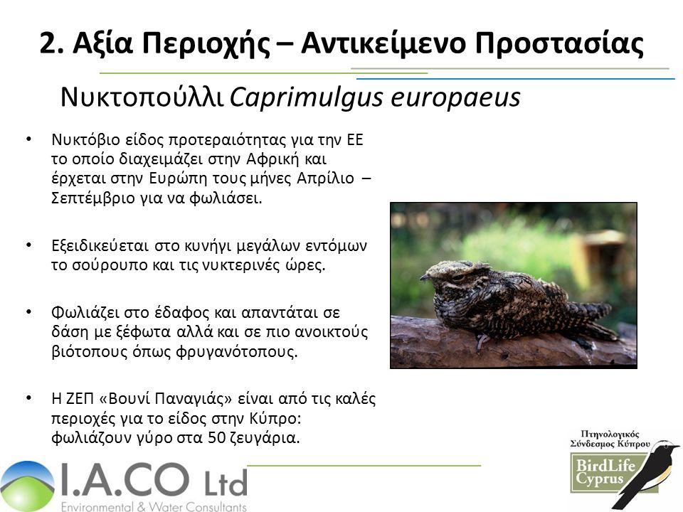 Νυκτοπούλλι Caprimulgus europaeus Nυκτόβιο είδος προτεραιότητας για την ΕΕ το οποίο διαχειμάζει στην Αφρική και έρχεται στην Ευρώπη τους μήνες Απρίλιο – Σεπτέμβριο για να φωλιάσει.