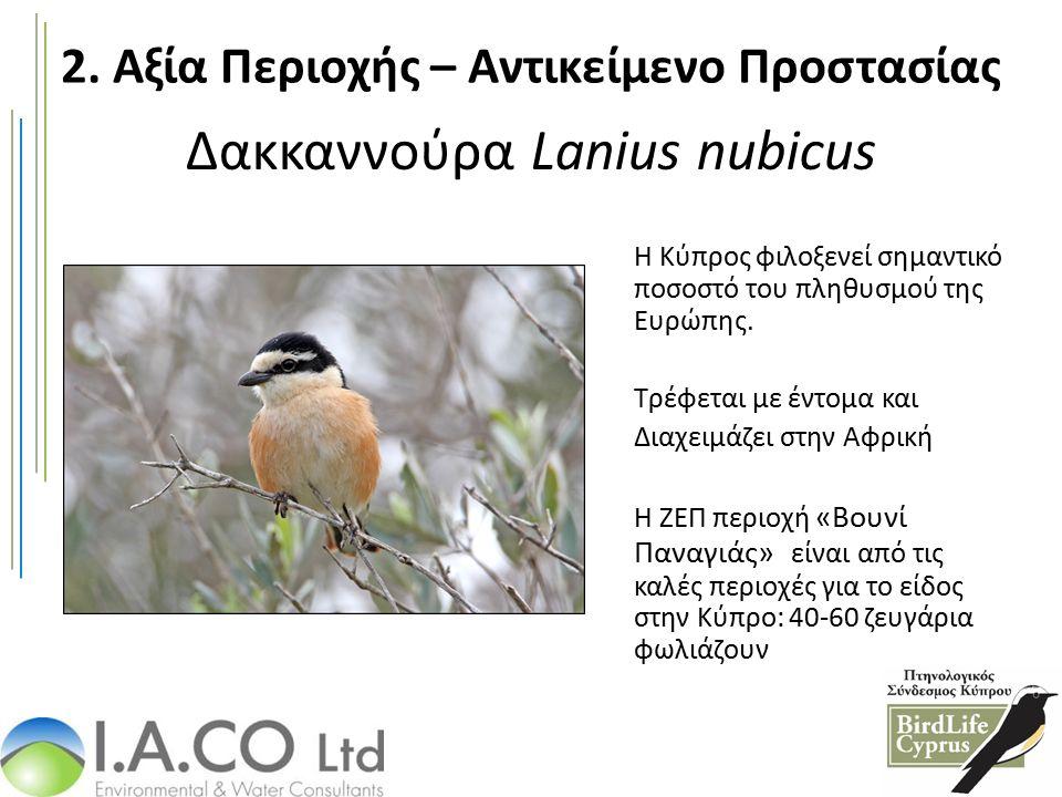 Δακκαννούρα Lanius nubicus Η Κύπρος φιλοξενεί σημαντικό ποσοστό του πληθυσμού της Ευρώπης. Τρέφεται με έντομα και Διαχειμάζει στην Αφρική Η ΖΕΠ περιοχ