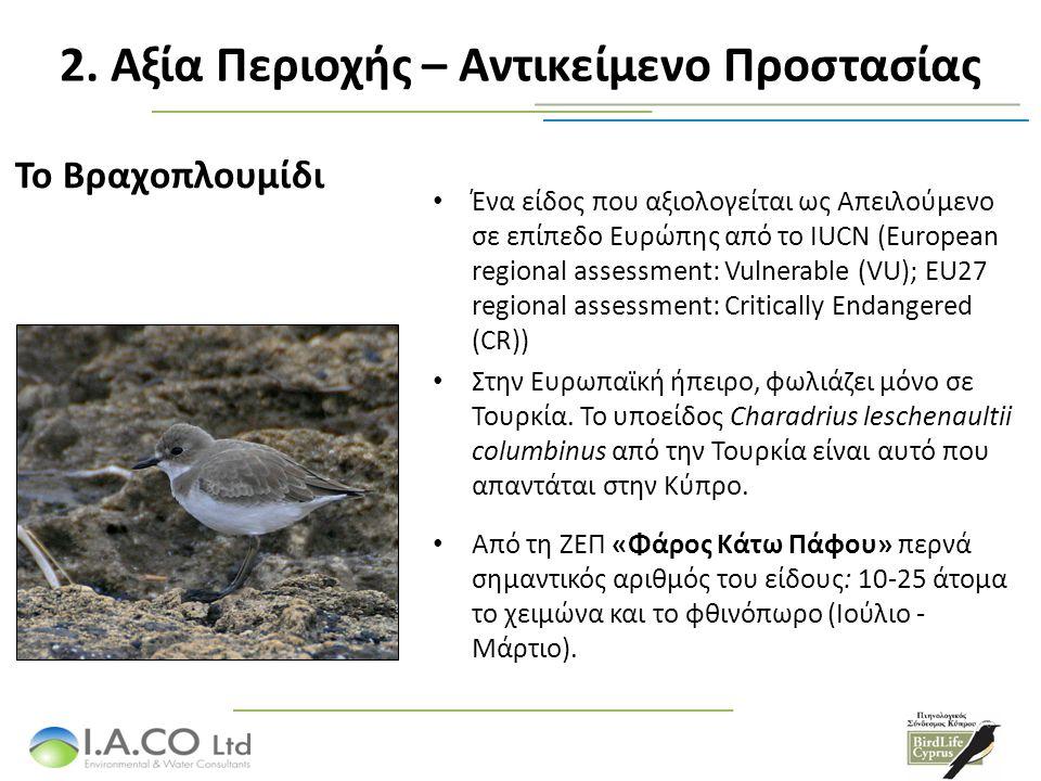 Το Βραχοπλουμίδι Ένα είδος που αξιολογείται ως Απειλούμενο σε επίπεδο Ευρώπης από το IUCN (European regional assessment: Vulnerable (VU); EU27 regional assessment: Critically Endangered (CR)) Στην Ευρωπαϊκή ήπειρο, φωλιάζει μόνο σε Τουρκία.