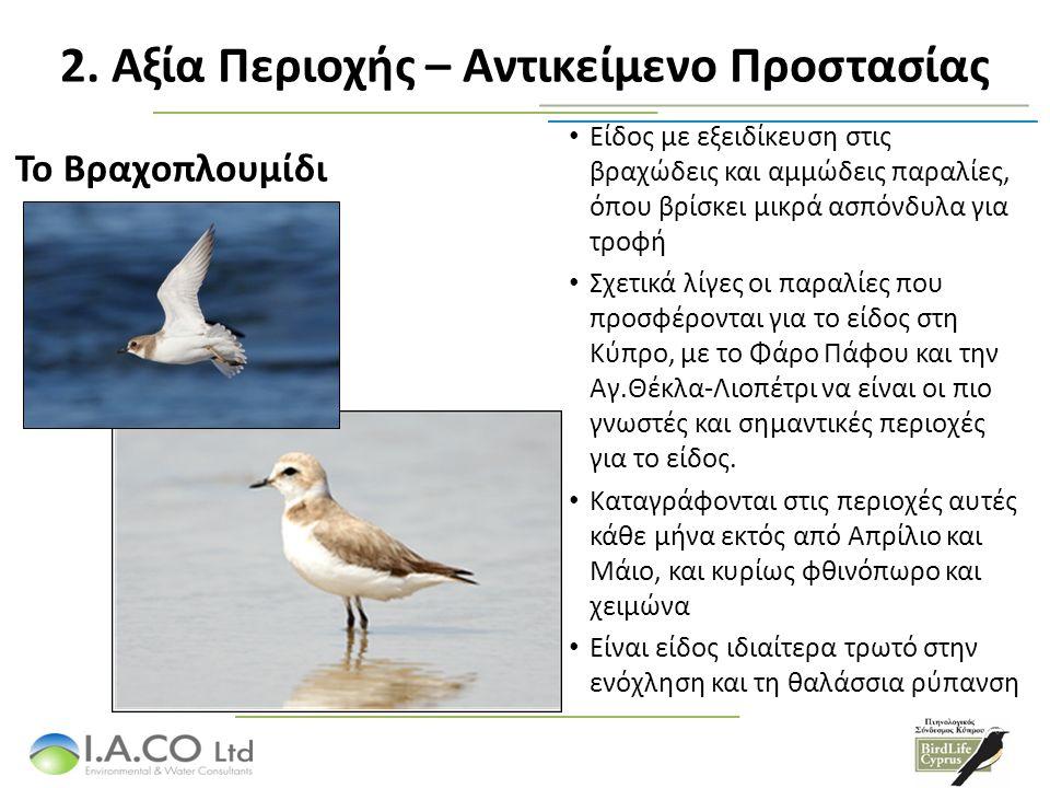 2. Αξία Περιοχής – Αντικείμενο Προστασίας Είδος με εξειδίκευση στις βραχώδεις και αμμώδεις παραλίες, όπου βρίσκει μικρά ασπόνδυλα για τροφή Σχετικά λί
