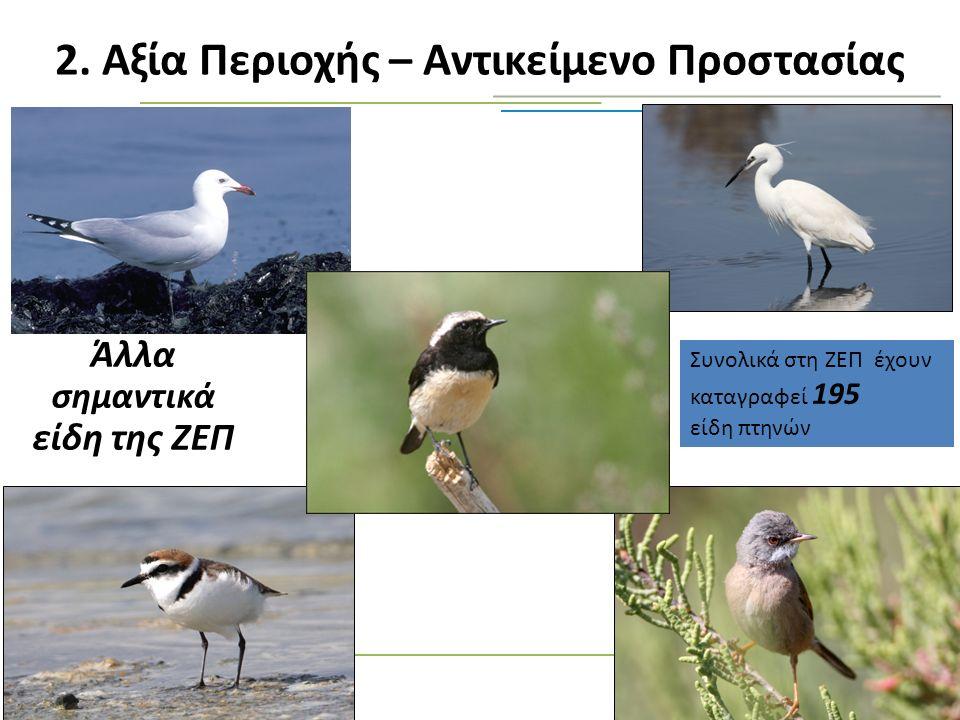 2. Αξία Περιοχής – Αντικείμενο Προστασίας Άλλα σημαντικά είδη της ΖΕΠ Συνολικά στη ΖΕΠ έχουν καταγραφεί 195 είδη πτηνών