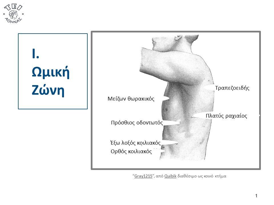 Κινητικότητα 3/3 42  Εάν είναι φυσιολογική η κινητικότητα της αυχενικής μοίρας της σπονδυλικής στήλης, του αντιβραχίου, του αγκώνα και του χεριού χαμηλά, το άτομο μπορεί να εξυπηρετηθεί με το βραχιόνιο να ευρίσκεται στο πλάι, για παράδειγμα στο φαγητό.