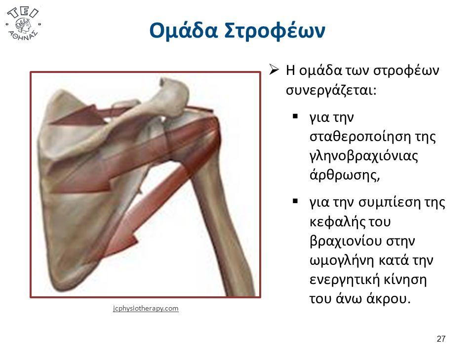 Ομάδα Στροφέων 27 jcphysiotherapy.com  Η ομάδα των στροφέων συνεργάζεται:  για την σταθεροποίηση της γληνοβραχιόνιας άρθρωσης,  για την συμπίεση τη