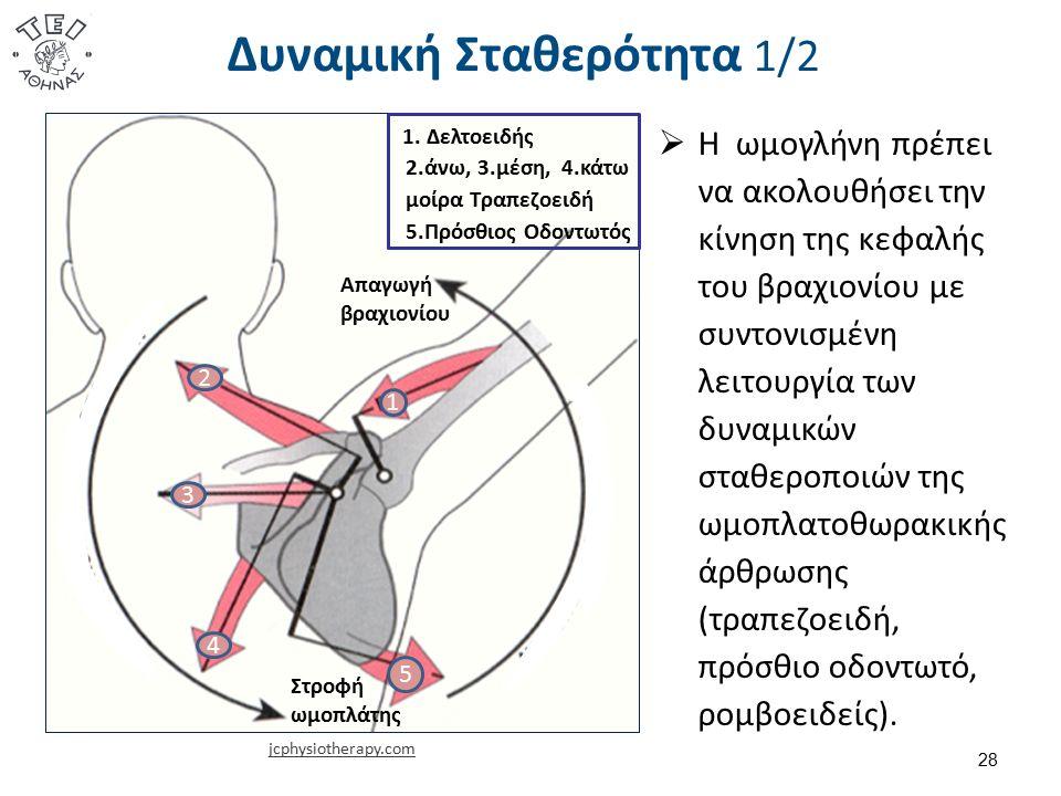 Δυναμική Σταθερότητα 1/2 28 jcphysiotherapy.com  Η ωμογλήνη πρέπει να ακολουθήσει την κίνηση της κεφαλής του βραχιονίου με συντονισμένη λειτουργία των δυναμικών σταθεροποιών της ωμοπλατοθωρακικής άρθρωσης (τραπεζοειδή, πρόσθιο οδοντωτό, ρομβοειδείς).