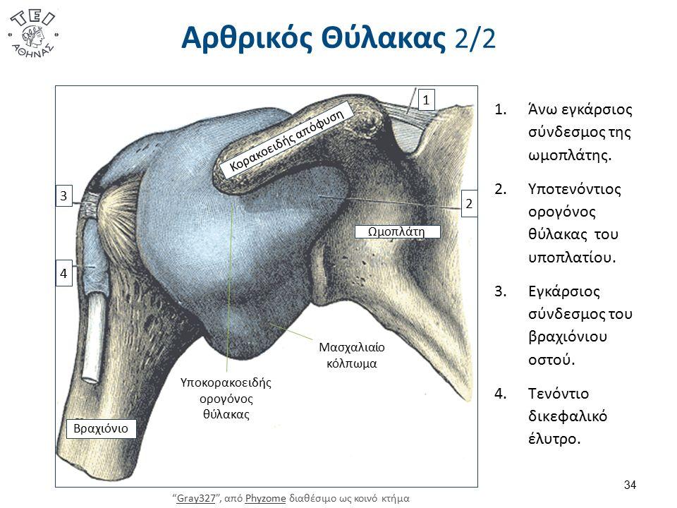 Αρθρικός Θύλακας 2/2 34 1.Άνω εγκάρσιος σύνδεσμος της ωμοπλάτης. 2.Υποτενόντιος ορογόνος θύλακας του υποπλατίου. 3.Εγκάρσιος σύνδεσμος του βραχιόνιου