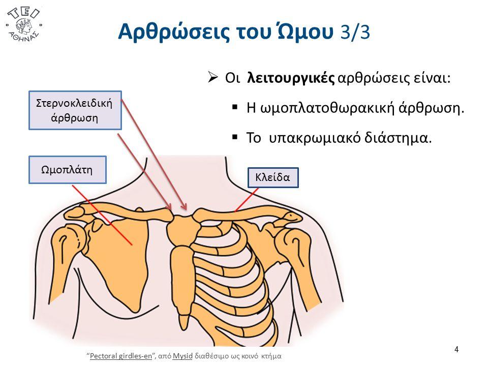 Αρθρώσεις του Ώμου 3/3 4  Οι λειτουργικές αρθρώσεις είναι:  Η ωμοπλατοθωρακική άρθρωση.  Το υπακρωμιακό διάστημα. Ωμοπλάτη Κλείδα Στερνοκλειδική άρ
