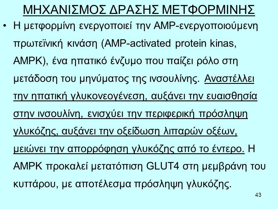 43 ΜΗΧΑΝΙΣΜΟΣ ΔΡΑΣΗΣ ΜΕΤΦΟΡΜΙΝΗΣ Η μετφορμίνη ενεργοποιεί την AMP-ενεργοποιούμενη πρωτεϊνική κινάση (AMP-activated protein kinas, ΑΜΡΚ), ένα ηπατικό ένζυμο που παίζει ρόλο στη μετάδοση του μηνύματος της ινσουλίνης.