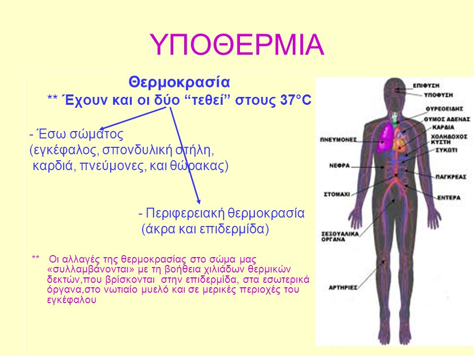 ΥΠΟΘΕΡΜΙΑ Θερμοκρασία ** Έχουν και οι δύο τεθεί στους 37°C - Έσω σώματος (εγκέφαλος, σπονδυλική στήλη, καρδιά, πνεύμονες, και θώρακας) - Περιφερειακή θερμοκρασία (άκρα και επιδερμίδα) ** Οι αλλαγές της θερμοκρασίας στο σώμα μας «συλλαμβάνονται» με τη βοήθεια χιλιάδων θερμικών δεκτών,που βρίσκονται στην επιδερμίδα, στα εσωτερικά όργανα,στο νωτιαίο μυελό και σε μερικές περιοχές του εγκέφαλου