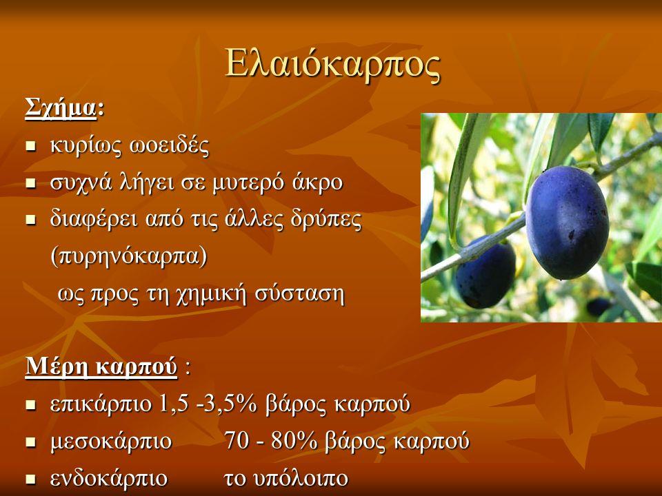 Ελαιόκαρπος Σχήμα: κυρίως ωοειδές κυρίως ωοειδές συχνά λήγει σε μυτερό άκρο συχνά λήγει σε μυτερό άκρο διαφέρει από τις άλλες δρύπες διαφέρει από τις