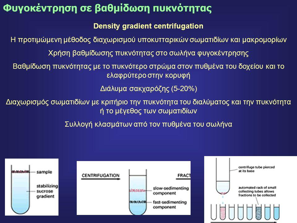 19 Density gradient centrifugation Η προτιμώμενη μέθοδος διαχωρισμού υποκυτταρικών σωματιδίων και μακρομορίων Χρήση βαθμίδωσης πυκνότητας στο σωλήνα φυγοκέντρησης Βαθμίδωση πυκνότητας με το πυκνότερο στρώμα στον πυθμένα του δοχείου και το ελαφρύτερο στην κορυφή Διάλυμα σακχαρόζης (5-20%) Διαχωρισμός σωματιδίων με κριτήριο την πυκνότητα του διαλύματος και την πυκνότητα ή το μέγεθος των σωματιδίων Συλλογή κλασμάτων από τον πυθμένα του σωλήνα Φυγοκέντρηση σε βαθμίδωση πυκνότητας