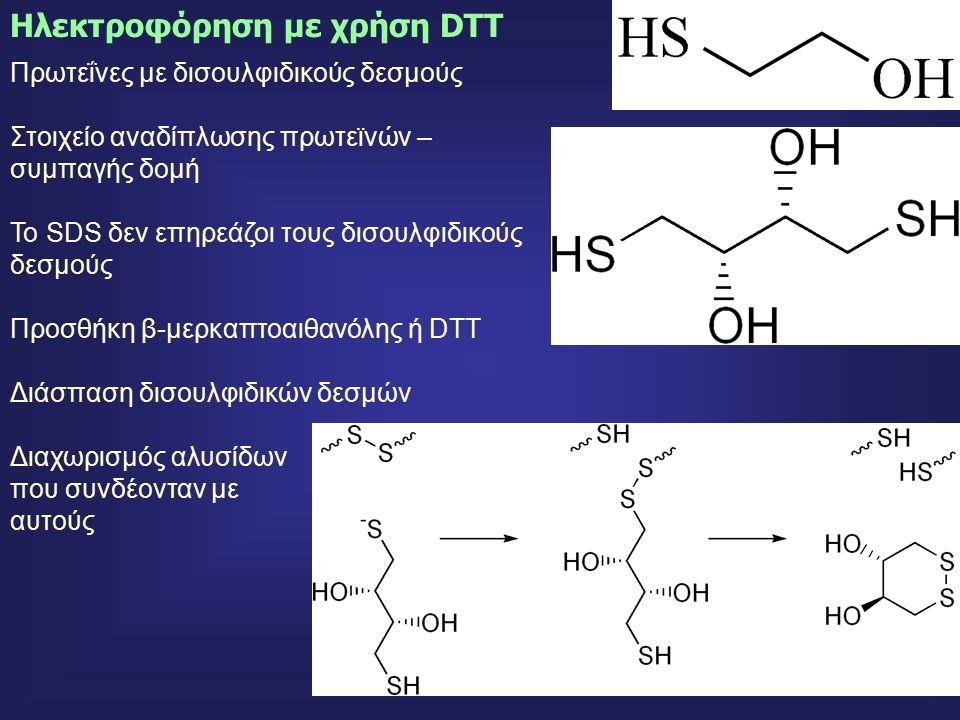 49 Πρωτεΐνες με δισουλφιδικούς δεσμούς Στοιχείο αναδίπλωσης πρωτεϊνών – συμπαγής δομή Το SDS δεν επηρεάζοι τους δισουλφιδικούς δεσμούς Προσθήκη β-μερκαπτοαιθανόλης ή DTT Διάσπαση δισουλφιδικών δεσμών Διαχωρισμός αλυσίδων που συνδέονταν με αυτούς Ηλεκτροφόρηση με χρήση DTT