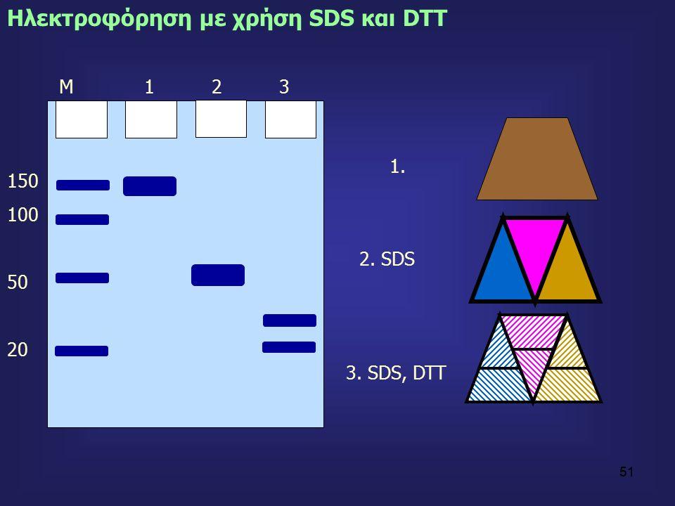 51 150 100 50 20 Ηλεκτροφόρηση με χρήση SDS και DTT Μ 1 2 3 2. SDS 3. SDS, DTT 1.