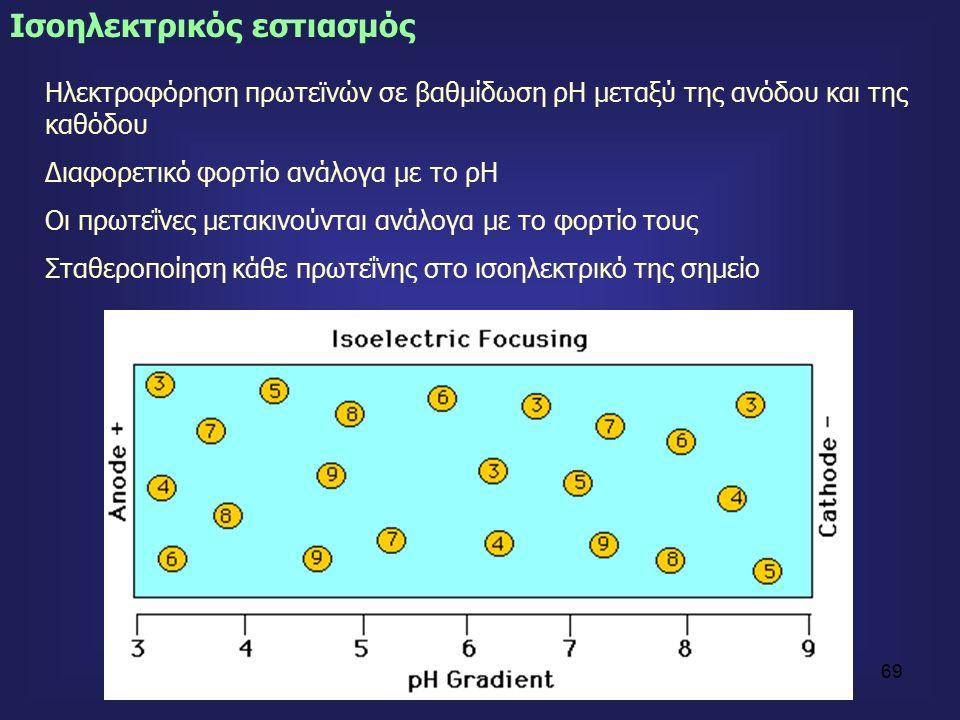 69 Ισοηλεκτρικός εστιασμός Ηλεκτροφόρηση πρωτεϊνών σε βαθμίδωση ρΗ μεταξύ της ανόδου και της καθόδου Διαφορετικό φορτίο ανάλογα με το ρΗ Οι πρωτεΐνες μετακινούνται ανάλογα με το φορτίο τους Σταθεροποίηση κάθε πρωτεΐνης στο ισοηλεκτρικό της σημείο