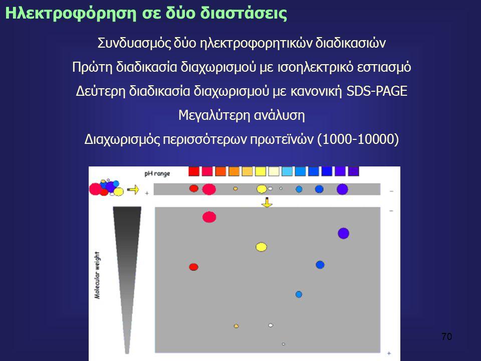 70 Ηλεκτροφόρηση σε δύο διαστάσεις Συνδυασμός δύο ηλεκτροφορητικών διαδικασιών Πρώτη διαδικασία διαχωρισμού με ισοηλεκτρικό εστιασμό Δεύτερη διαδικασία διαχωρισμού με κανονική SDS-PAGE Μεγαλύτερη ανάλυση Διαχωρισμός περισσότερων πρωτεϊνών (1000-10000)