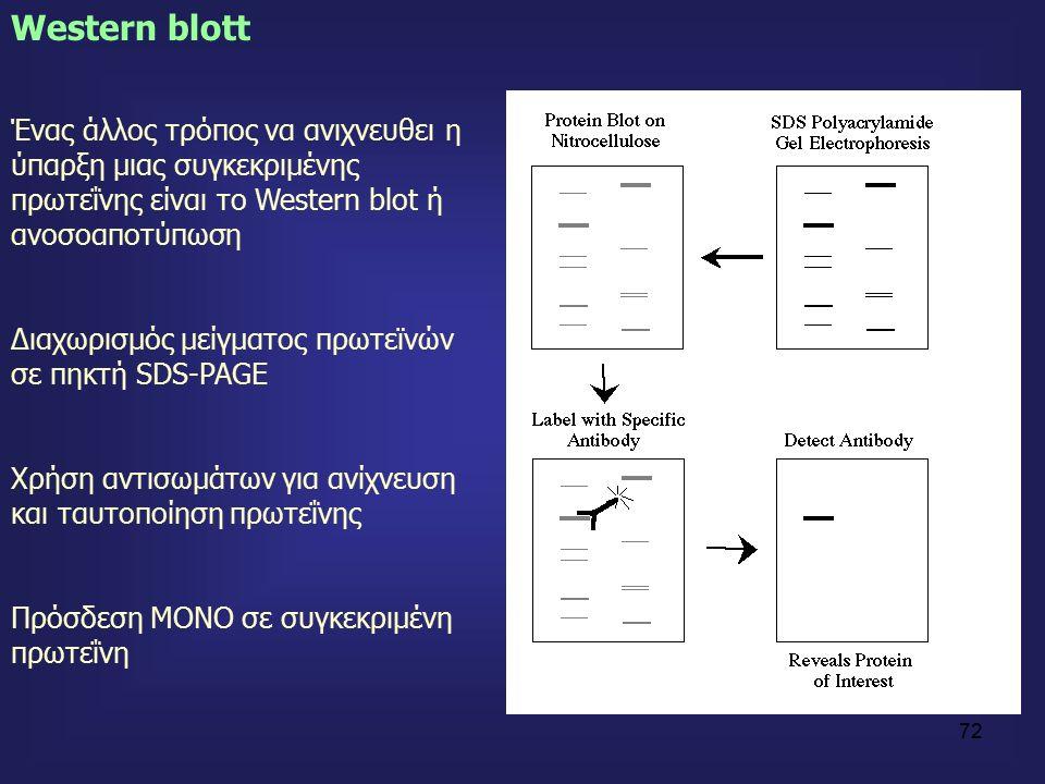72 Western blott Ένας άλλος τρόπος να ανιχνευθει η ύπαρξη μιας συγκεκριμένης πρωτεΐνης είναι το Western blot ή ανοσοαποτύπωση Διαχωρισμός μείγματος πρωτεϊνών σε πηκτή SDS-PAGE Χρήση αντισωμάτων για ανίχνευση και ταυτοποίηση πρωτεΐνης Πρόσδεση ΜΟΝΟ σε συγκεκριμένη πρωτεΐνη