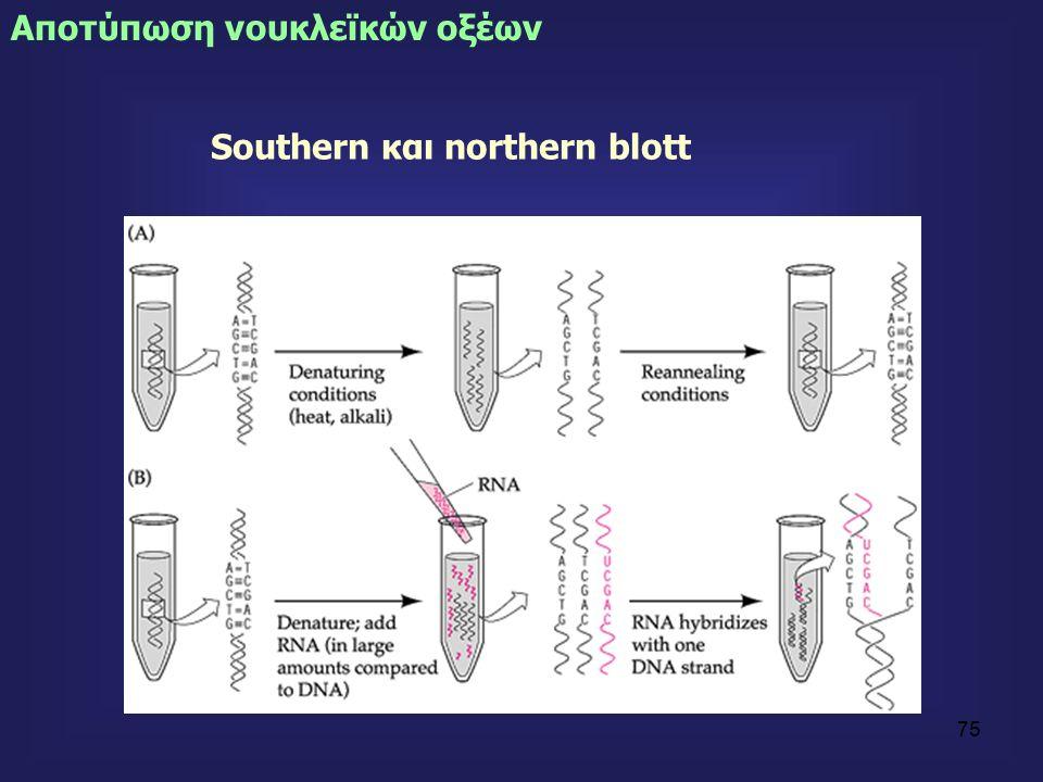 75 Southern και northern blott Αποτύπωση νουκλεϊκών οξέων