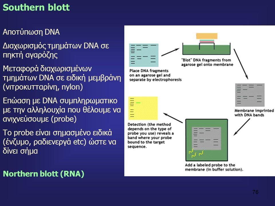76 Southern blott Αποτύπωση DNA Διαχωρισμός τμημάτων DNA σε πηκτή αγαρόζης Μεταφορά διαχωρισμένων τμημάτων DNA σε ειδική μεμβράνη (νιτροκυτταρίνη, nylon) Επώαση με DNA συμπληρωματικο με την αλληλουχία που θέλουμε να ανιχνεύσουμε (probe) Το probe είναι σημασμένο ειδικά (ένζυμο, ραδιενεργά etc) ώστε να δίνει σήμα Northern blott (RNA)
