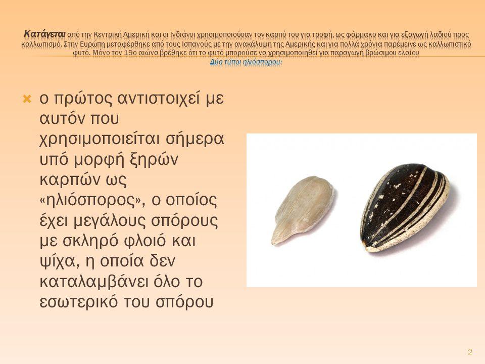 2  ο πρώτος αντιστοιχεί με αυτόν που χρησιμοποιείται σήμερα υπό μορφή ξηρών καρπών ως «ηλιόσπορος», ο οποίος έχει μεγάλους σπόρους με σκληρό φλοιό κα