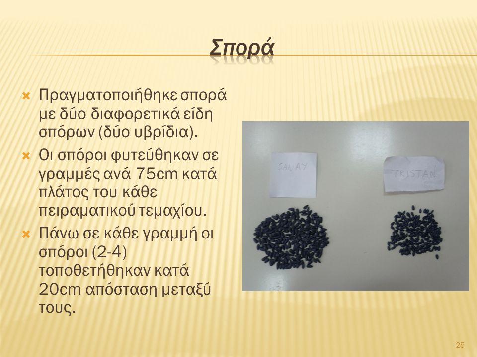  Πραγματοποιήθηκε σπορά με δύο διαφορετικά είδη σπόρων (δύο υβρίδια).  Οι σπόροι φυτεύθηκαν σε γραμμές ανά 75cm κατά πλάτος του κάθε πειραματικού τε
